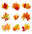 autumn leaves yellow foliage set vector image vector image