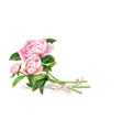 realistic pink rose flower leaves bouquet vector image vector image