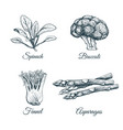 set plants and vegetables vector image vector image