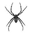 spider Argiope bruennichi vector image