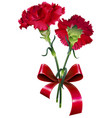 bouquet of red carnation flower isolated on white vector image vector image