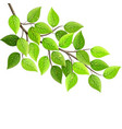 branch with fresh green leaves isolated eco vector image