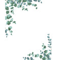 eucalyptus border frame on white background vector image