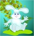 Funny cartoon Bunny vector image vector image