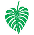 leaf of monstera - tropical plant vector image vector image