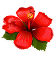 red hibiscus icon vector image vector image