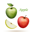 Watercolor Apple isolated on white background vector image
