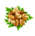 Mushrooms champignons with vector image