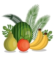 set cartoon fruits tropicals design vector image vector image