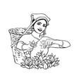 sketch sri-lanka local woman collecting tea vector image