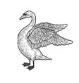 swan with spread wings sketch vector image