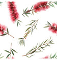 watercolor australian callistemon seamless pattern vector image vector image