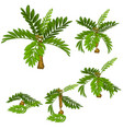 stages damage tropical plants isolated on white vector image