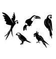 tropical parrot set with feathers and wings black vector image