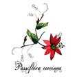 Passiflora vector image vector image