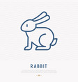 rabbit thin line icon vector image vector image