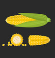 set sweet golden corn cobs and grains isolated vector image vector image