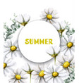 chamomile summer card watercolor vintage vector image vector image