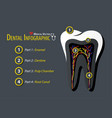 dental infographic flat design vector image vector image
