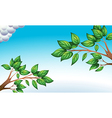 The green leaves and the clear blue sky vector image vector image