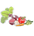 hand draw colorful different vegetables vector image vector image