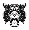 tiger 0012 vector image vector image
