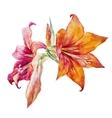 Watercolor flowers vector image
