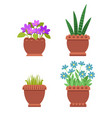 acattleya and sansevieria set vector image