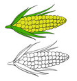 corn in color and without color in outline vector image vector image