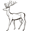 deer wildlife animal christmas forest horned vector image