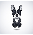 French bulldog isolated on white background vector image vector image