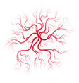human blood veins vector image vector image
