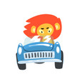 lion driving blue car wild animal character using