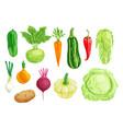 organic vegetable watercolor set vector image