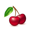realistic cherry berry fruit 3d isolated vector image