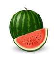 realistic watermelon and slice on white background vector image vector image