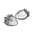 two graphic strawberries isolated on white vector image