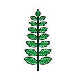 christmas leaf natural decoration ornament foliage vector image