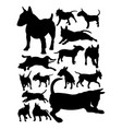 bull terrier dog animal silhouette vector image vector image