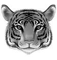 tigerhead grey vector image vector image
