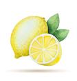 Watercolor lemon yellow Vegetable menu vector image
