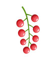 colorful fruit red currants icon vector image
