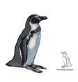 Drawing of Humboldt penguin on white background vector image vector image