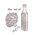 drawing pine nut oil vector image vector image