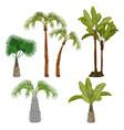 palm trees beach california plants brazil hawaii vector image vector image