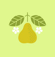 pear with leaves and flowers vector image vector image
