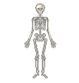 Pixel human skeleton isolated vector image
