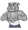 Aggressive bulldog tearing his shirt 3 vector image vector image