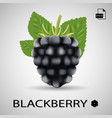 blackberry sweet fruit forest berry isolated on vector image vector image