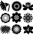 Floral designs in black colors vector image vector image
